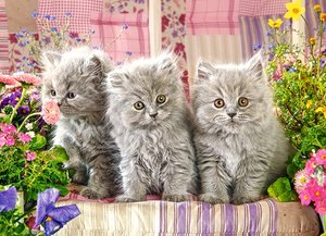 Three Grey Kittens 300 Bitar Castorland