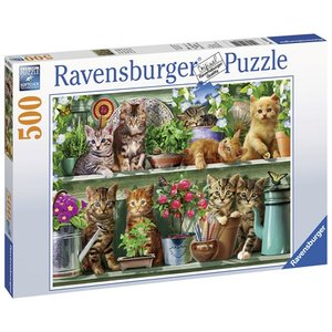 Cats on the Shelf  500 Bitar Ravensburger