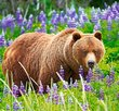 Bear on the meadow 500 Bitar Castorland